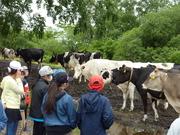 牛を見学する児童達の写真